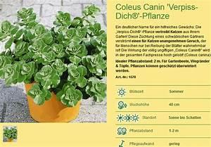 Verpiss Dich Pflanze : katzen vertreiben mit verpiss dich pflanze ~ Orissabook.com Haus und Dekorationen