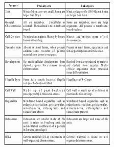 Different Between Prokaryotic And Eukaryotic Cell  Plant