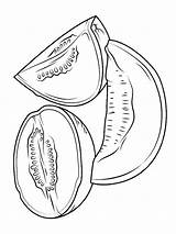 Melon Coloring Pages Cantaloupe Template Fruits Sheet Sheets Favorite Recommended sketch template