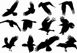 Raven clipart flight silhouette - Pencil and in color ...