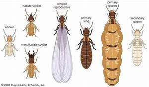 Termites  U2013 Ark Pest Management