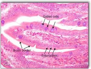 Histology Digestive Page 1 Frame