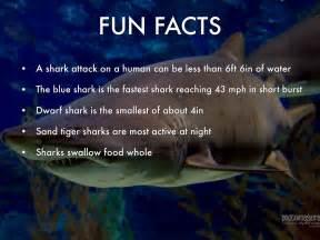 Great White Shark By Kathywhittington