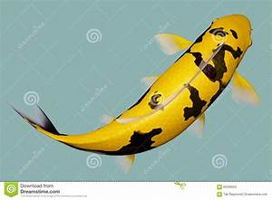 Yellow Black Koi Fish Stock Illustration - Image: 65299225