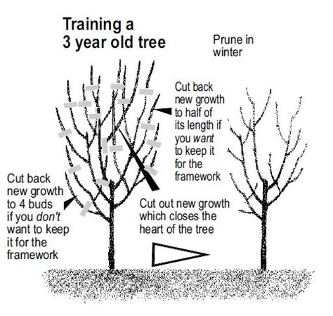 fruit trees plant care leaflets website all in one