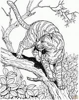 Coloring Pages Jungle Animals Realistic Animal Amazing Popular sketch template