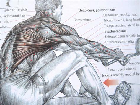 printable  muscles diagrams diagram site