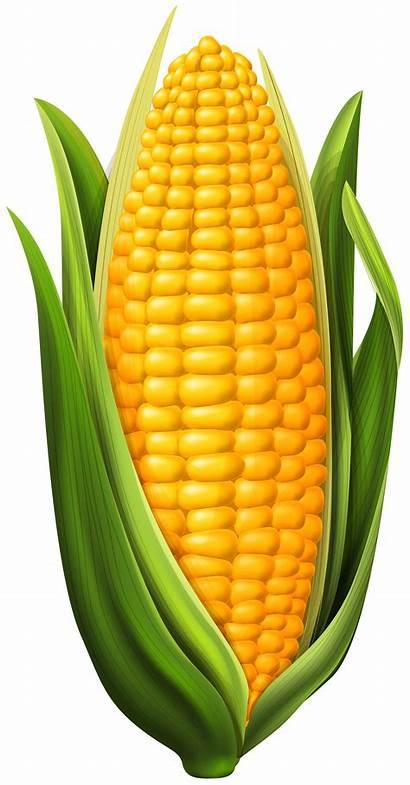 Corn Clip Clipart Vegetables Transparent Yopriceville Previous