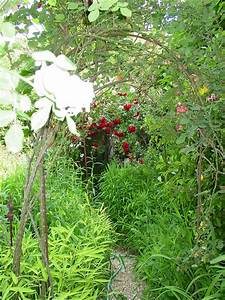 Garden Photo Today: A magical tunnel of roses