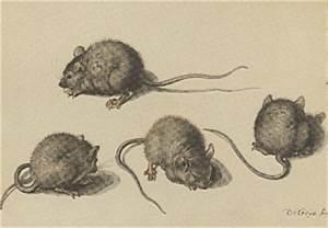 Wie Wird Man Mäuse Im Haus Los : m use vertreiben ungeziefer im haus ~ Lizthompson.info Haus und Dekorationen