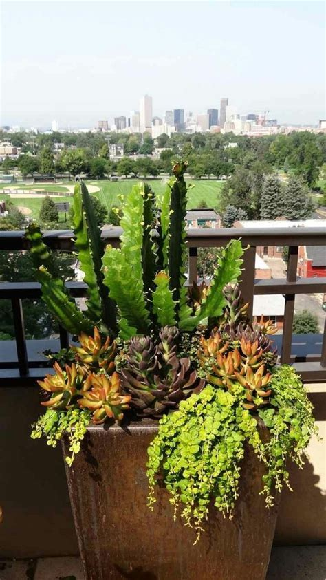 1000  ideas about Large Planters on Pinterest   Large