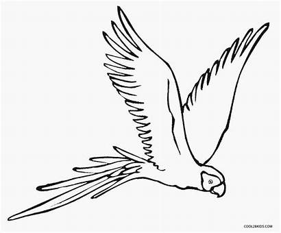 Parrot Coloring Pages Flying Bird Printable Parrots