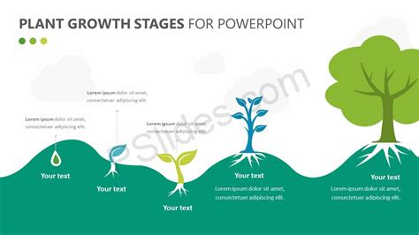 Plant Growth Stages Diagram For Powerpoint Pslides