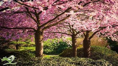 Japanese Relaxing Chinese Romantic Meditation Garden Visita