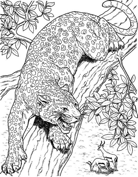 jaguar jaguar eyeing  mule deer coloring pages jaguar