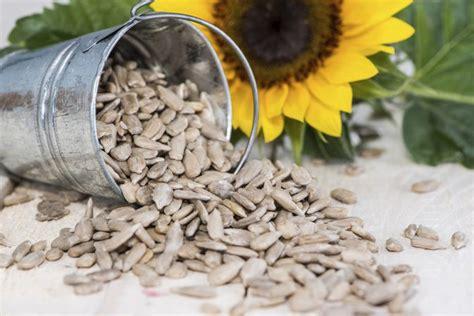 how do i roast shelled sunflower seeds livestrong com