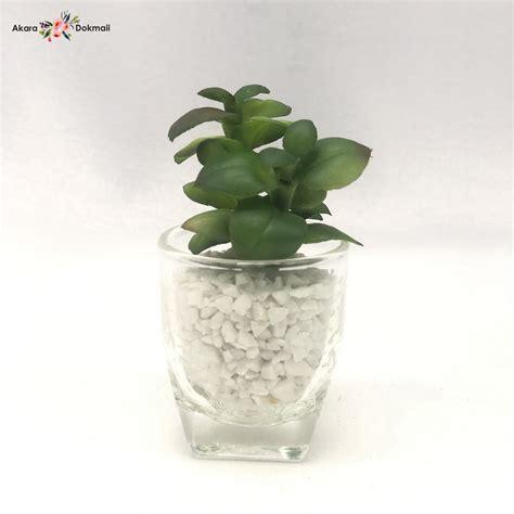 ต้นไม้ปลอมจิ๋วพร้อมแก้ว succulent plant สำหรับวางประดับตกแต่ง
