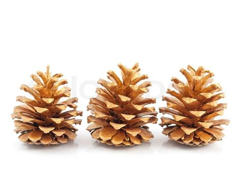 gold pine cones on a white background stock photo