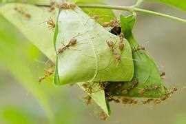 Ameisen Im Garten? Ameisenplage? Ameisen Bekämpfen  So Gehts