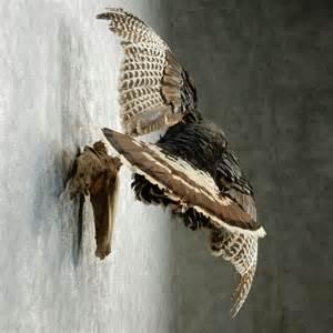 Flying Turkey Mounts Taxidermy