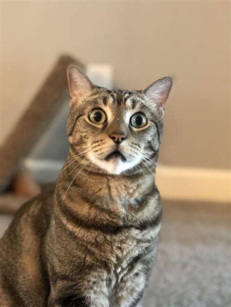 47 dramatiski kaķi, kuri ir pelnījuši «Oskaru» - Spoki ...