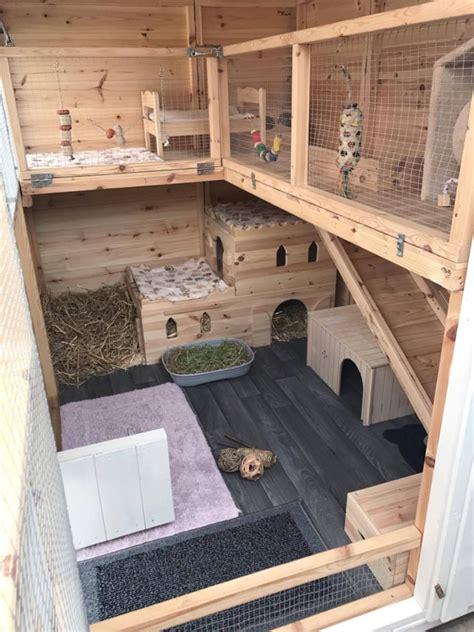 rabbit care advice   bunny pig house rabbit