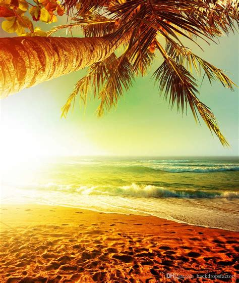 palm tree sunset beach photography background white