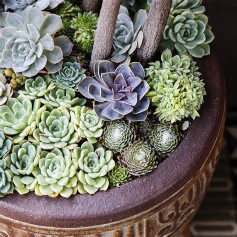 planting succulents in containers 38 ideas for succulents in containers sunset magazine 4262