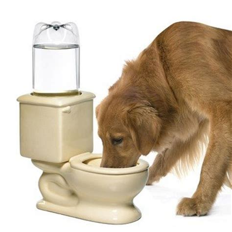toilet and cat water bowl the green