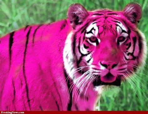 pink tiger pink tiger pictures strange pics freaking
