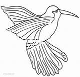 Hummingbird Coloring Pages Printable Cool2bkids Bird Template Humming Birds Templates Printables Adult Drawings Getcolorings sketch template