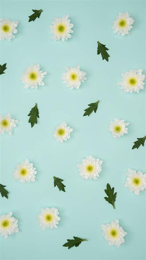 wallpaper 1350x2400 chamomile leaves minimalism