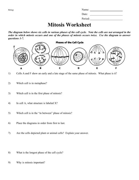 mitosis worksheet answers enchanted learning free