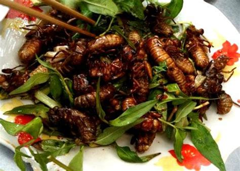insecte cuisine insect delicacies from vietnamnet
