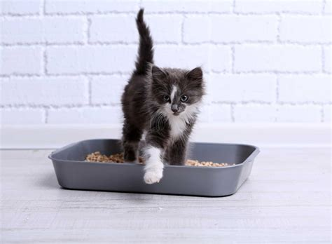 can you flush tidy cat litter