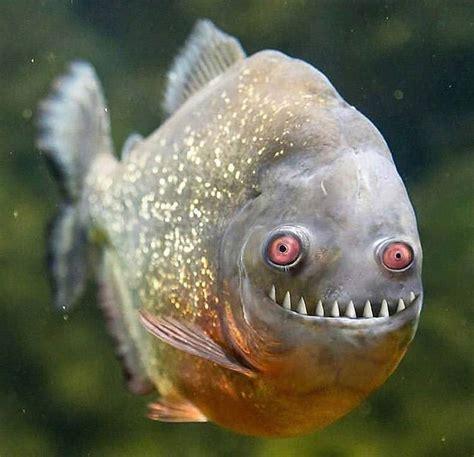epic pix  gag  funny crazy ass  fish