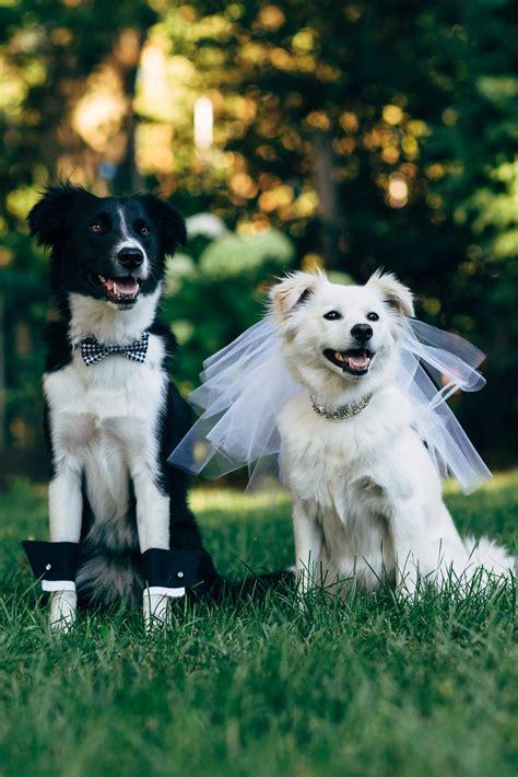 dog wedding wallpapers high quality
