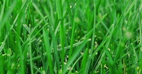 Certain Grass Varieties Grow Well In The Shade.