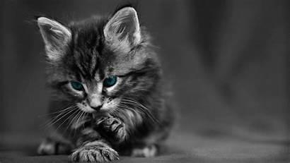 Animal Chat Chaton Familier Domestique Mignon Hauskatze