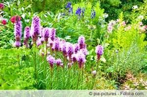 Lang Blühende Pflanzen : immerbl hendes beet ganzj hrig bl hende pflanzen ~ Eleganceandgraceweddings.com Haus und Dekorationen