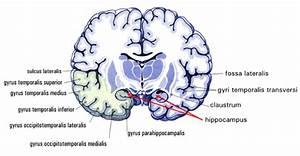 Which Part S  Of The Brain  When Impaired By Alcohol  Play An Important Role In Learning