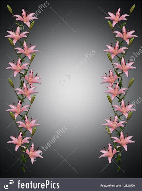illustration  asian lily flowers border  black
