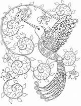 Coloring Printable Adult Hummingbird Gorgeous sketch template