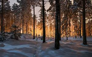 Landscape, Nature, Winter, Forest, Sunrise, Sunlight, Trees, Snow, Cold, Wallpapers, Hd, Desktop