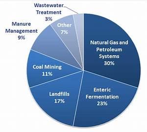 Livestock Flatulence is a Major Methane Source - SavvyRoo