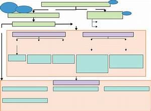Infantile Haemangioma Diagnostic Algorithm  Pc  Primary