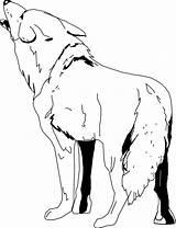 Coyote Coloring Colorear Kojot Dibujos Roca Dibujo Printable Inclinado Sobre Pniu Drzewa Sheet Onlinecoloringpages Drukuj sketch template