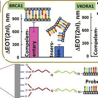 (PDF) Label-free discrimination of single nucleotide ...