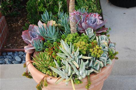 garden arrangements succulents herbs welcome to green life