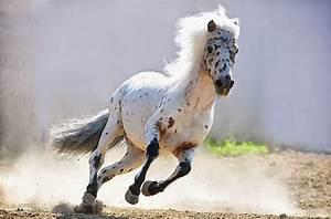 Au Cheval Blanc : testclod cheval blanc au galop ~ Markanthonyermac.com Haus und Dekorationen